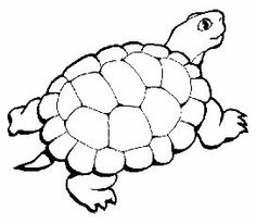 turtle coloring pages for adult - Turtle Coloring Pages