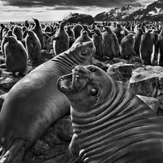 In Focus: How to Understand Sebastião Salgado's Exquisite—and Harrowing—Photographs of Nature's Splendor | Artspace. In his new series <em>Genesis</em>, the one-time Magnum photojournalist Sebastião Salgado turns his camera from oppressive social systems to our ecosystems.