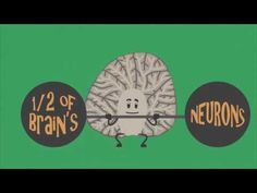 VIDEO: How alcohol affects your developing cerebellum. Calling all teachers, school counselors, school nurses and parents - this is one part of a 9-video series developed to teach middle school students the affects alcohol has on the brain. After viewing the video, visit asklistenlearn.org to download free lesson plans and activities to help educate 5th and 6th grade children on how to say no to underage drinking and yes to a healthy lifestyle.