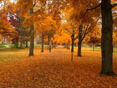 Kenyon College in the fall. via photography from www.tutorbuddies.com blog
