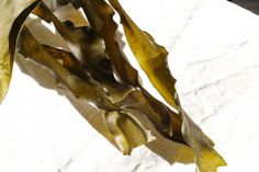 Why You Should Eat More Seaweed