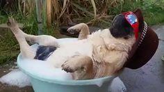Пёс - кайфун !