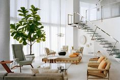 Ficus lyrata commonly known as the fiddle-leaf fig--indoor tree. Indoor Trees, Potted Trees, Indoor Plants, Home Living Room, Living Spaces, Ficus Lyrata, Decoracion Vintage Chic, Estilo Interior, Fiddle Leaf Fig Tree