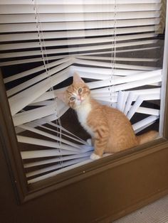 Ginger was very good at toilet papers sculpture.....but it was her work in blinds that caught the attention of the international art community.