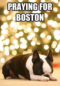 Boston Terrier Praying for Boston Victims at the Marathon - http://www.bterrier.com/boston-terrier-praying-for-boston-victims-at-the-marathon/