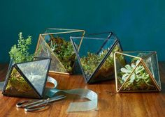 50 Under $50 Chic Ways to Upgrade Your Space   Who says a garden has to be outdoors? FACETED TERRARIUMS, $29-$39, WESTELM.COM
