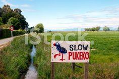 Slow Pukeko Sign and Rural Scene royalty-free stock photo