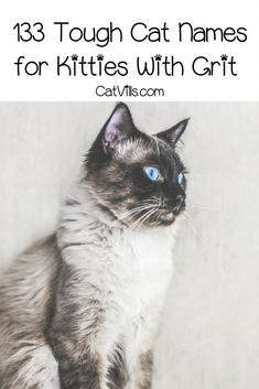 133 Tough Cat Names for Kitties With Grit & Gristle If you're looking for the best tough cat names for your rock-star kitty, we've got you covered! Check out 133 for gritty kitties! Grey Kitten Names, Grey And White Kitten, Grey Cats, White Cats, Funny Cat Names, Pet Names, Funny Cats, Cat Fountain, Star Wars
