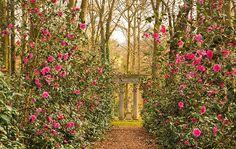 Top tips on camellias - Garden Design Journal