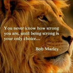 Best quotes about strength bob marley stay strong Ideas Inspirational Quotes With Images, Inspirational Quotes About Success, Motivational Quotes For Life, Quotes About Strength, Positive Quotes, Daily Quotes, Instagram Words, Funny Quotes For Instagram, Namaste