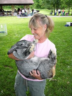 My animal bucket list: Flemish Giant Rabbit! - they are so cute yet get bigger than certain dog breeds!