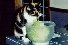 1993, Naughty Mandy - JhC #Cat #Pet