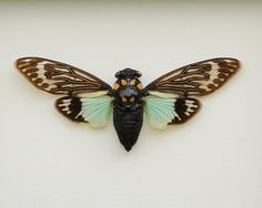 Framed Insect Real Cicada Tosena splendida by BugUnderGlass, $39.99