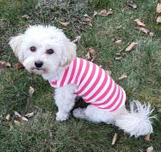 dog shirts for dogs cute puppy clothes dog tank top girl