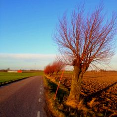 Country Road Take Me Home, Sunrises, Pathways, Country Roads, Journey, Sky, Spaces, Trelleborg, Heaven