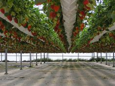 Hydroponic vegetables and fruit can grow quickly within small spaces, and without the use of soil.
