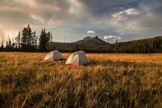 Out on the Thorofare  A remote backcountry camp out on the Yellowstone Thorofare.