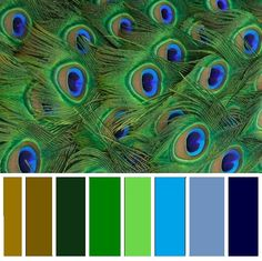 Peacock Color Scheme I WANT this for our kitchen!