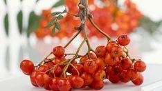 Jeřabiny: Zhubnete a posílíte imunitu. Recepty jsou jednoduché - Žena.cz - magazín pro ženy Fruit, Plants, Food, Essen, Meals, Plant, Yemek, Eten, Planets