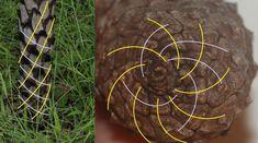Fibonacci fibs and facts – Green Island in the Sky