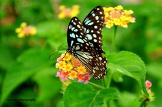 new butterfly pictures | New World: Life of Butterfly