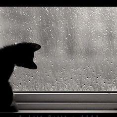 Rain drops:)