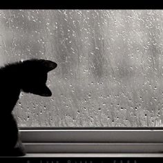 Rain drops and the cat