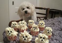 Bichon Cupcakes You my Gosh.How cute are these? I have a 15 year old Bichon and seeing these certainly made me smile! Puppy Cupcakes, Puppy Cake, Daisy Cupcakes, Fluffy Cupcakes, Bear Cupcakes, Ninja Cupcakes, Camo Cupcakes, Snicker Cupcakes, Marshmallow Cupcakes