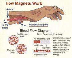 Magneettien vaikutus punaisiin verisoluihin.