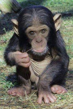 5680 Best animal pics images in 2019 | Animals beautiful