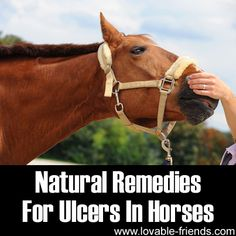 Natural Remedies For Ulcers In Horses