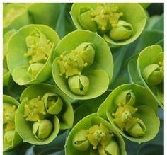 fresh green flowers #AmyLauDesign  #inspiration #hamptons #nature