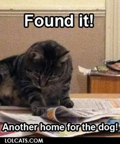 LOLCats - Found it! Another home for the dog!