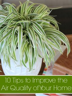 Did you know you should have 1 houseplant for every 100 square feet in your home for optimum air quality? Check out these tips from Dusty Rogers of All Things G&D to improve the air quality of your home, and breathe easy!