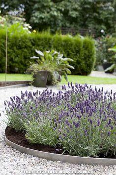 Lavender: Trädgårdsflow