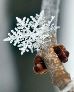 18 Perfect Snowflakes