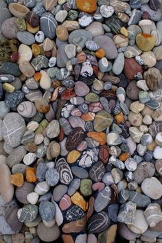 Can You Find What's Hiding In These Rocks?