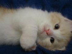 Little Cutie Cat :*