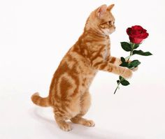 Will you excep this rose?