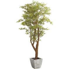 "The exquisite Japanese maple tree is unparalleled in nature, but our flowering faux runs a close second. In fact, considering its low maintenance, it might even come in first. Six foot tree comes in a silver-colored pot. <br></br> <li>Size: 72""H</li>"