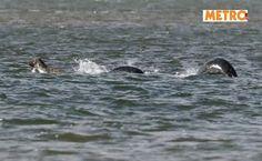 """""""Ho visto il mostro di Loch Ness"""". Lo scatto choc del fotografo inglese"""
