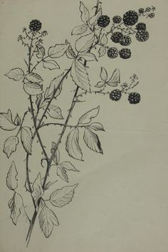 blackberry bush / Tattoo