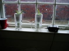 Hydroponics for Urban Gardens Home Hydroponics, Aquaponics, Window Sill, Agriculture, Container Gardening, Flow, Bottles, Planter Pots, Gardens