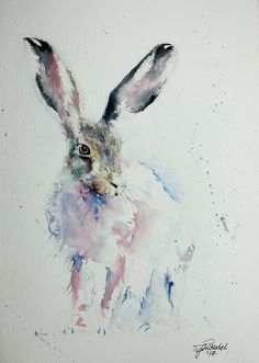 Eastern Hare – Watercolours Directly from the artist