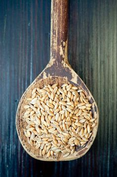 Related to the wheat plant, spelt is naturally high in fiber, and an excellent source of protein. Because of its rich nutrient content and active ingredients, spelt makes an excellent dietary base for those recovering from illness. http://foodal.com/knowledge/paleo/spelt-remedies-fields/