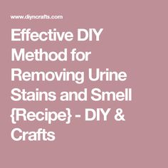 Effective DIY Method for Removing Urine Stains and Smell {Recipe} - DIY & Crafts