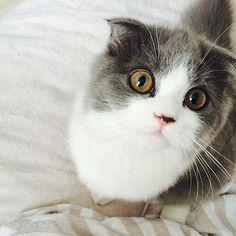 Cute face,  Cute eyes