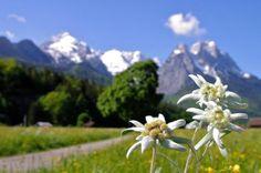 Alpspitze & Waxensteine