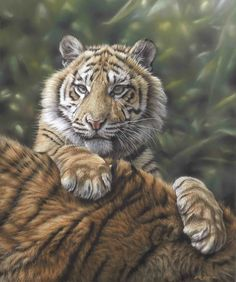 Paintings of Tigers by master Wildlife Artist Eric Wilson. Wildlife Art for  sale, original tiger paintings and prints for sale. Paintings of tigers to  purchase. Limited and open edition.