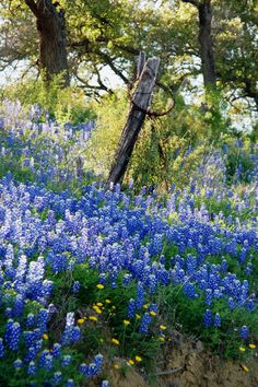 Is there anything as beautiful as the Texas Hill Country in the spring?  I think not!